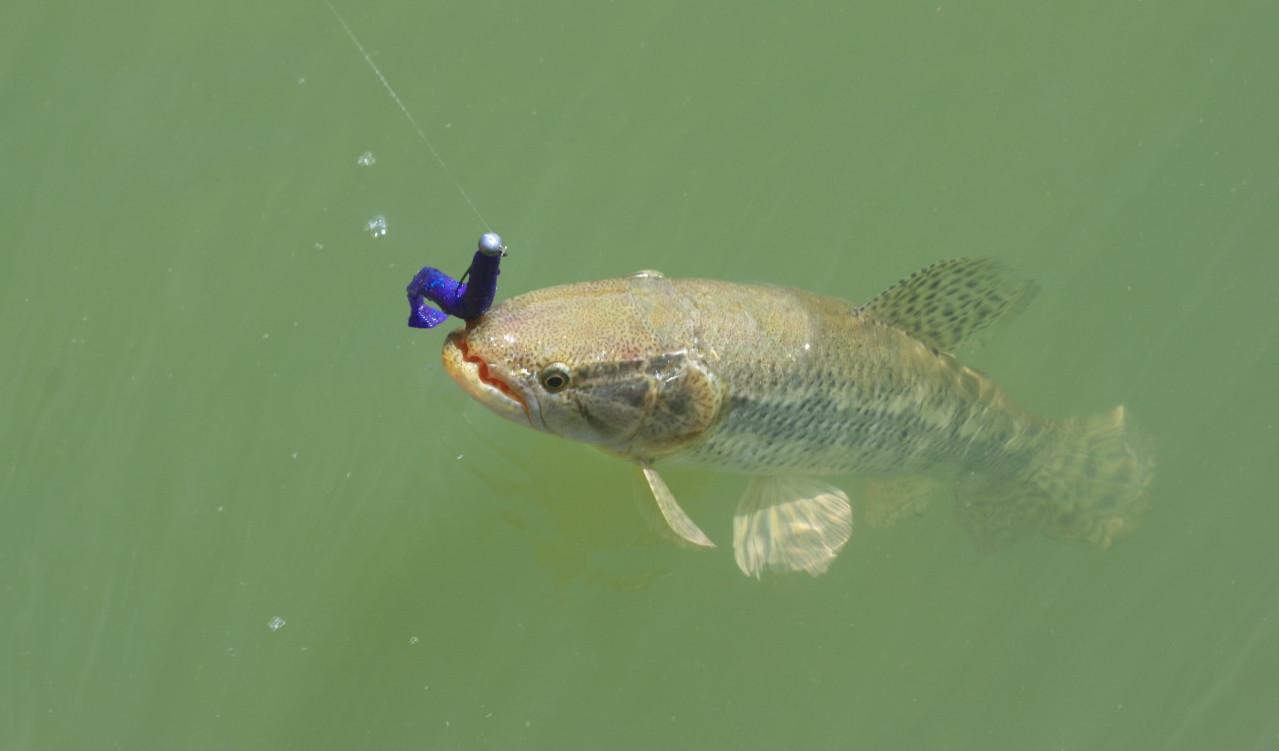 É preciso ficar atento às espécies de peixes e seus cuidados