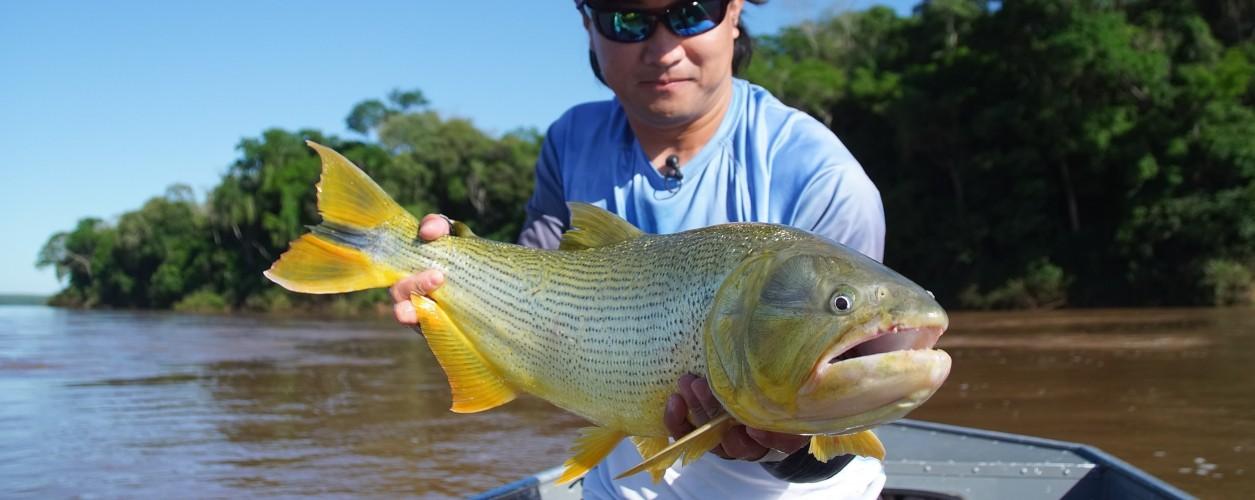dourado, rio Uruguai