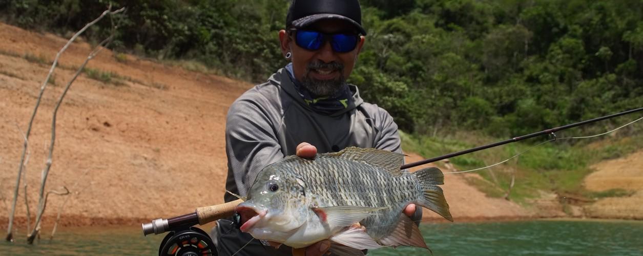 tilápia, fly fishing