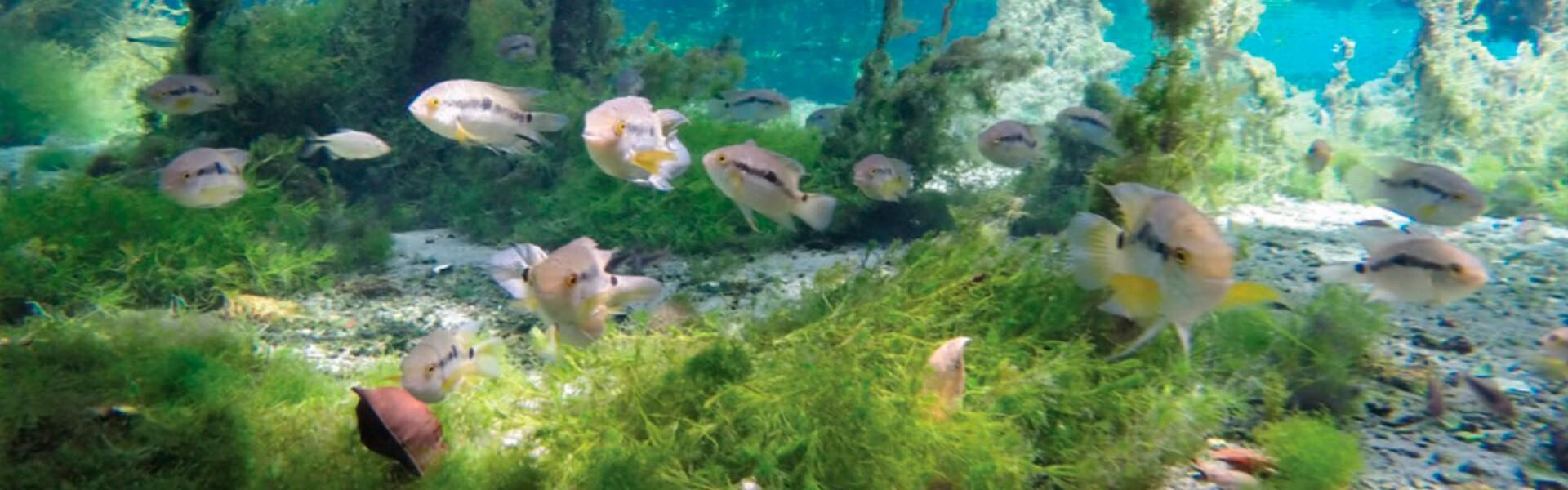 aquariofilia