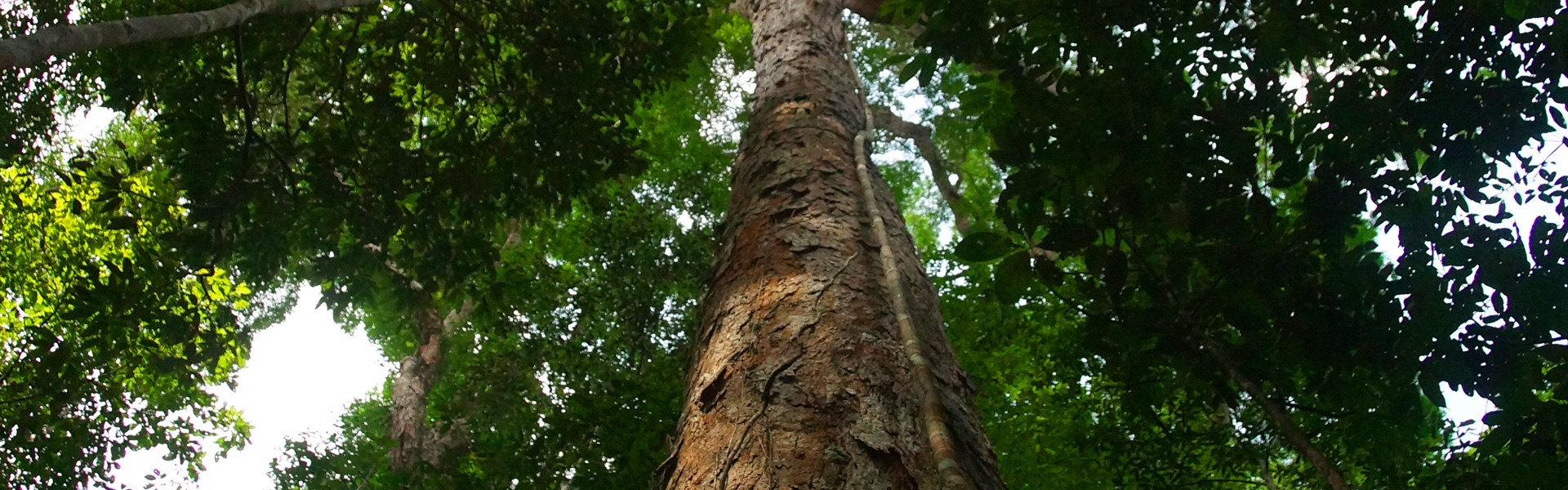 Documentário Pescando e Cantando - Cantos Amazônicos irá ao ar hoje na Fish TV