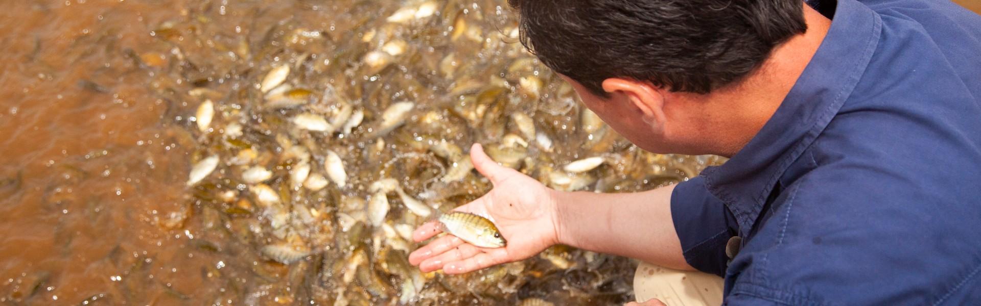 Instituto de pesca oferecerá curso sobre melhoramento genético de peixes