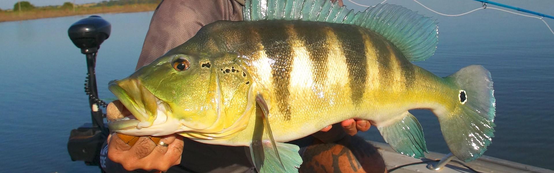 Encontro debate a pesca esportiva do tucunaré em Presidente Epitácio, em São Paulo
