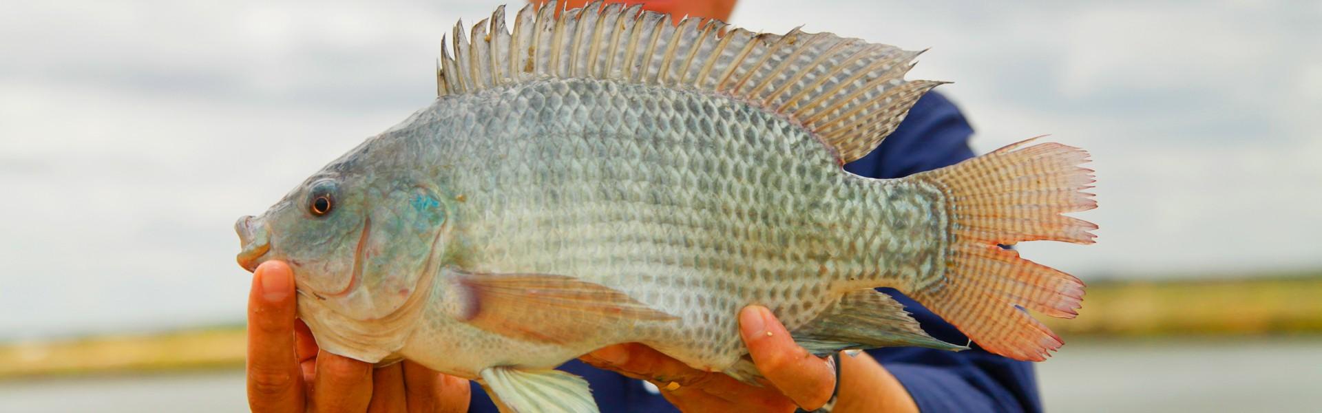 Semana do Pescado revela que brasileiro está comendo mais peixe