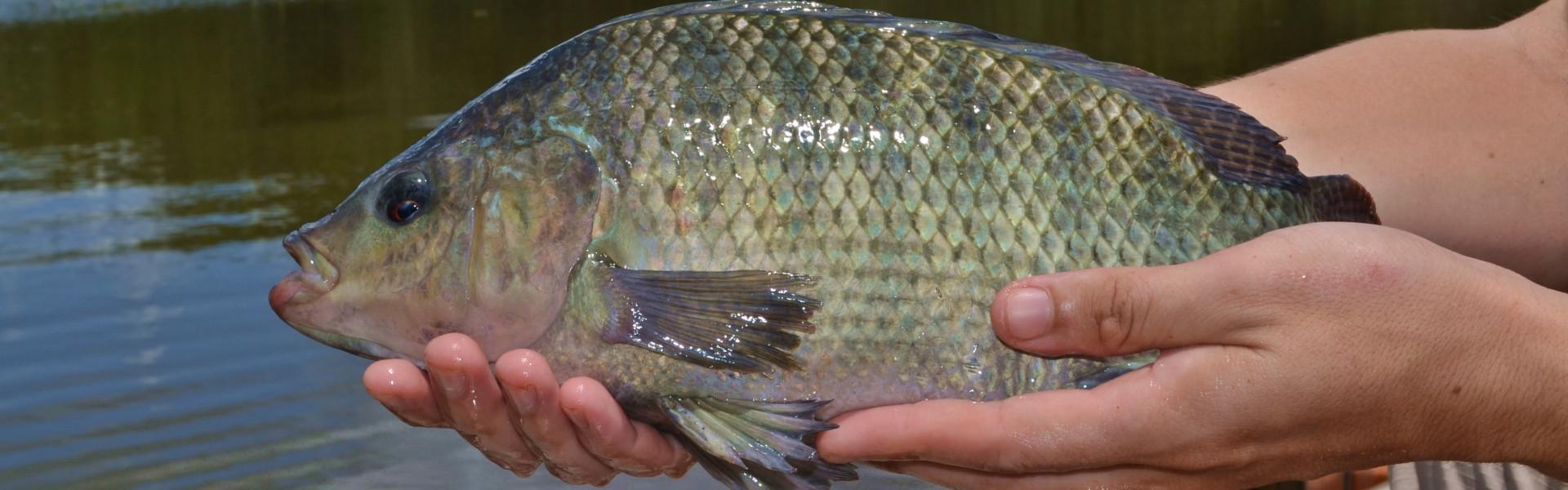 Foto: Instituto de Pesca - SP