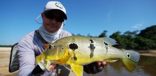 Gerson Kavamoto pesca esportiva tucunaré