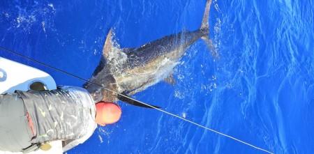Pesca de marlin em Canavieiras