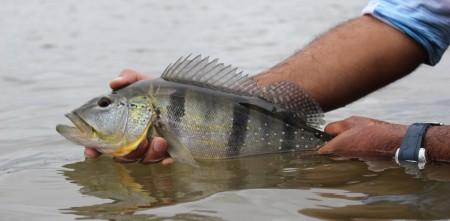 pesca esportiva, pesque e solte
