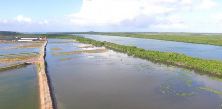 CRIAÇÃO DE TILÁPIA NA BACIA DO RIO URUGUAI É LIBERADA