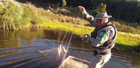 PATRAM realiza fiscalização ambiental de combate a pesca predatóriaPATRAM REALIZA AÇÃO DE COMBATE A PESCA PREDATÓRIA EM CANELA