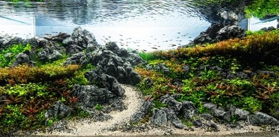 Inscrições para concurso de aquapaisagismo encerram em agosto