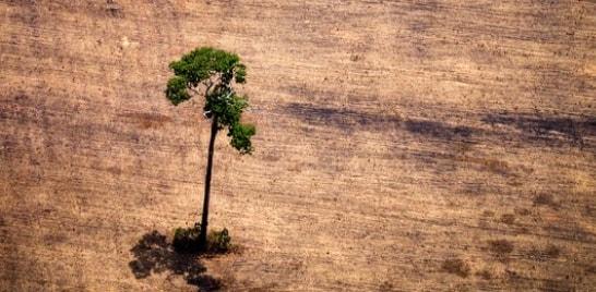 Desmatamento na Amazônia cresce 467% em outubro