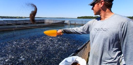 GeneSeas obtém certificação Best Aquaculture Practices
