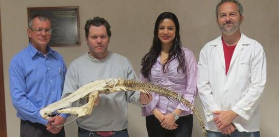 Exposição de esqueleto de surubim abre sexta-feira no RS