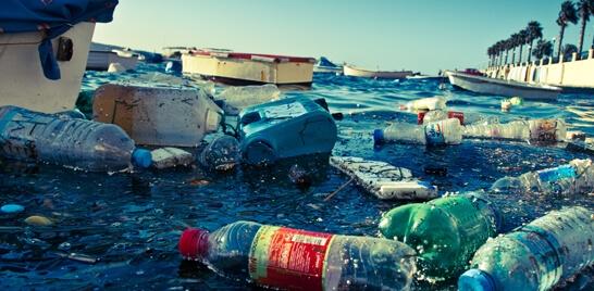 Aves ingerem plástico nos oceanos por serem atraídas pelo cheiro