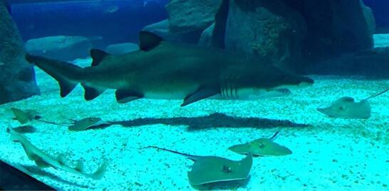 AquaRio abre para visitas escolares