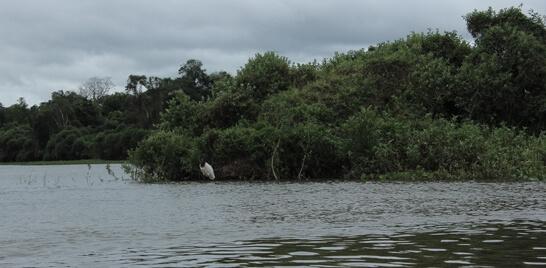 Um alerta! Rio Cuiabá registra redução de peixes