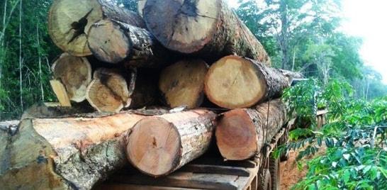 Em um ano, desmatamento da Amazônia Legal cai 18%