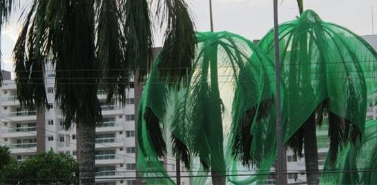 200 periquitos morrem próximos a Condomínio na cidade de Manaus