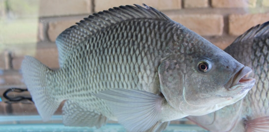 Vem aí o curso de processamento artesanal de peixes