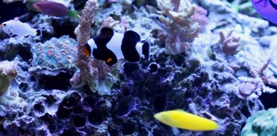 Inscrições abertas para encontro de aquaristas