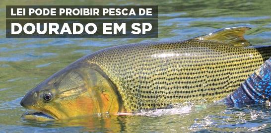 Será votado nesta sexta, o projeto que proíbe a pesca de dourado no Estado de São Paulo