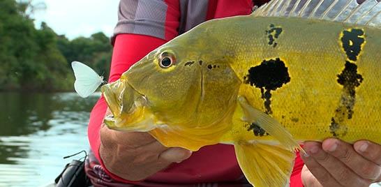Em pauta: turismo de pesca esportiva em terras indígenas