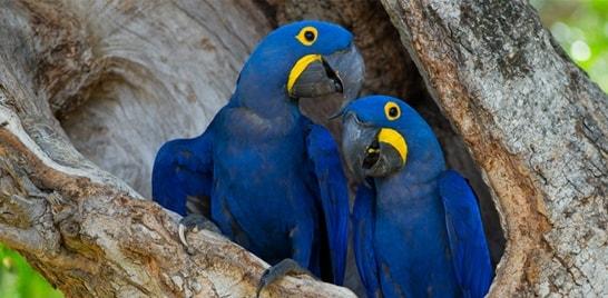 Campanha da WWF-Brasil tem agora animais brasileiros