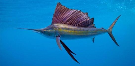 Encerramento do XXVII Torneio de Pesca Oceânica acontece dia 13