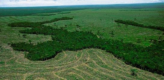 Desmatamento na Amazônia aumenta nos meses de agosto e setembro