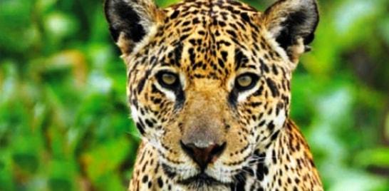 Lista de animais ameaçados de extinção no Brasil tem 395 novas espécies