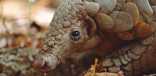 Planeta pode perder 75% das espécies nos próximos séculos