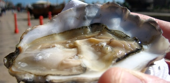 Vírus ameaça mercado mundial de ostras