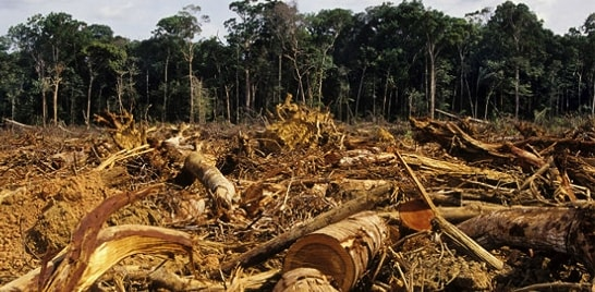 Desmatamento aumenta pelo quinto mês consecutivo