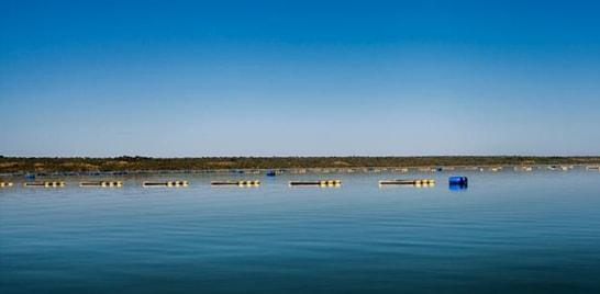 Levantamento aponta capacidade de peixes em viveiros