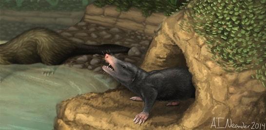 Descobertos fósseis de mamíferos milenares na China