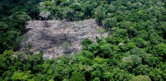Desmatamento está acelerado no mundo