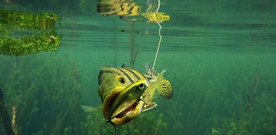 Abertas as inscrições para 6º Torneio de Pesca Esportiva de Três Lagoas