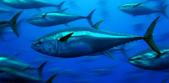Pescado lidera comercio mundial