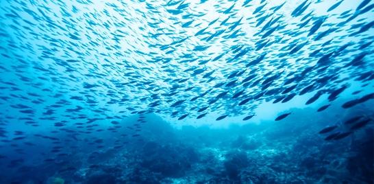 Aquecimento global prejudica desenvolvimento dos peixes