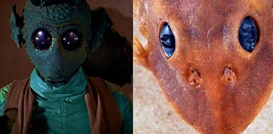Nova espécie de bagre ganha nome de personagem de Star Wars