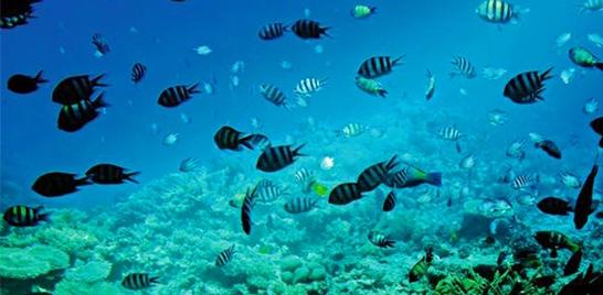 Acidificação dos oceanos causou a maior extinção em massa na Terra