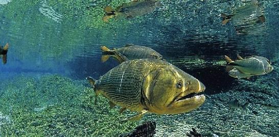 Floresta, água e clima serão debatidos em Bonito