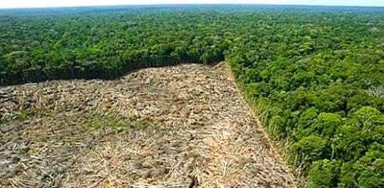 Estudo liga desmatamento com a seca no País