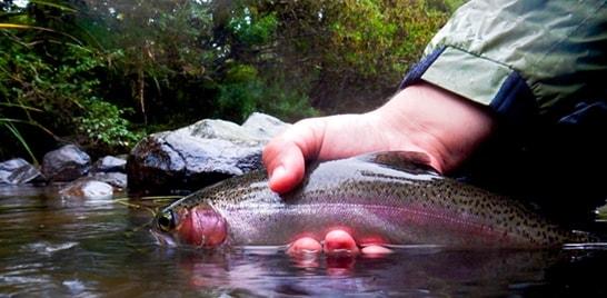 Trutabrazuca oferece experiência de pesca esportiva
