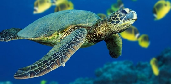 Biodiversidade Aquática é tema de pós-graduação