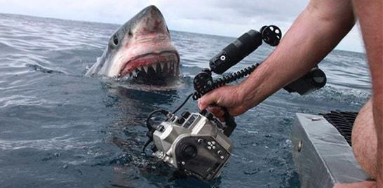 Equipe registra foto inusitada de tubarão branco na Austrália