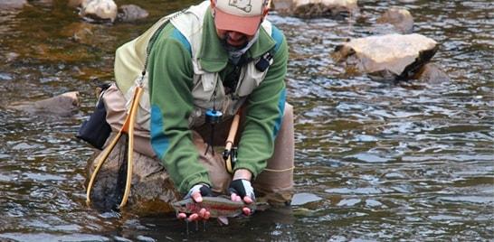 Projeto irá devolver peixes às águas gaúchas
