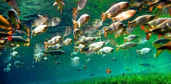 Vídeo alerta para a preservação das águas do Pantanal