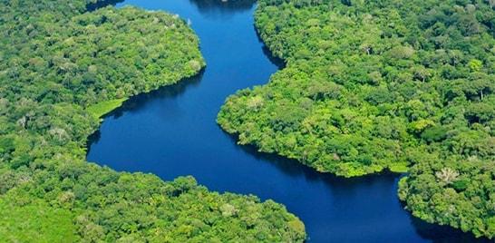 17 de julho é o dia de Proteção às Florestas